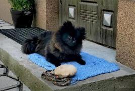 Dog training, Puppy school. Cynologist Dnipro
